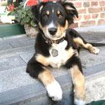 Hofhund Bobby