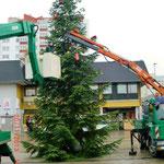 Foto: Fr. Schreiber, der Baum steht