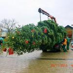 Foto: Fr. Schreiber, der Christbaum wird vom Gartenamt geliefert und aufgestellt. Vorher schmückten Mitglieder des BVH die Spitze des Baumes