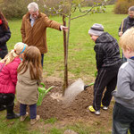 Herr Müller hält den Baum, die Kinder gießen die Wurzeln kräftig an