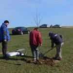 Der erste Apfelbaum steht (Dietmar, Jochen und Bernd).