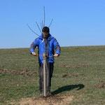 Dietmar bindet die Bäume mit Sisalgarn fest.