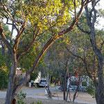Morgenstimmung auf dem Campingplatz