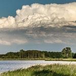"am ""Streng"", NSG Rietzer See, Brandenburg"