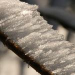 sneeuw op de takken