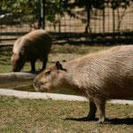 Зоопарк в Загребе. Парк Максимир, Отдых в Хорватии в не сезон.