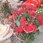 REWE Koll / Blumen Koch 1