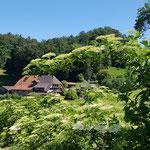 BZG Moosboden - Schärer Franziska