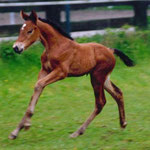 Tactique des Fusains as a foal 1 week