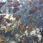 noch mehr Fische
