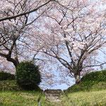 のぼりたくなる春の階段(船越堤公園2014)