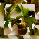 orchid_square_0020_green