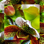 orchid_square_9861_green