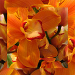 orchid_square_0926_orange