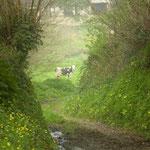 chemin sur la commune de Savigny Manche