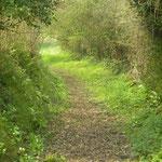 chemin de la Sauvagére Commune de Montpinchon
