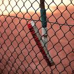 Linienbesen am Zaun. Foto: Tobias Bunners
