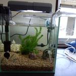 サテライトボックス。稚魚を守るために隔離