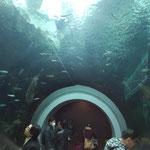 水族館(淡水魚)が併設