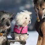 der Zwerg ist Fee, der Hund meiner Freundin Edith