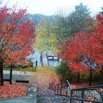 ein grauer Herbsttag mit bunten Blättern