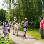Mit einem Esel spazieren