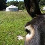 Bauernhof mit Esel