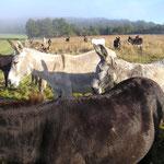 der Bauernhof der Esel