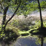 der Fluss in der nähe der Ferienwohnung