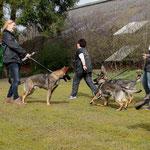 Raico, Ragna, Rosie-Amber en Regina