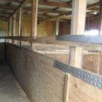 eine kleine Stallgasse, rechts drei große Boxen (5x3m)