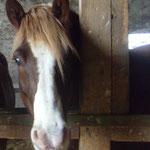 Rico beäugt neugierig die neue Mitbewohnerin im Stall