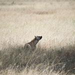 ... und nach einem kurzen Blick zum Leopard...