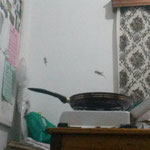 Kochstelle mit den Gekkos im Hintergrund