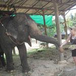 Füttern der Elefanten nach dem Trekking