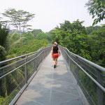 Forest Walk der Southern Rindges Tour