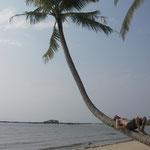 Palmen am Strand für uns alleine...