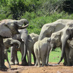 Wasserloch im Addo Elephant National Park