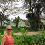 Singapore Zoo: Giraffen