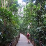 Forest Trail iim Botanischen Garten