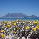 Tafelberg von der Table View Bucht aus