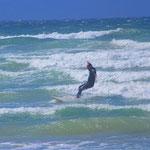 Surfen in der Bucht mit der höchsten Konzentration an weißen Haien weltweit (Muizenberg)