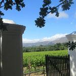 Groot Constantia, das älteste Weingut Südafrikas