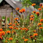 Vietnam - Aldea Rural