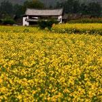 China - Zona Rural