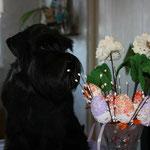 Старт`с Оф Уайт Найт Мазератти - вл.Богданова Юлия, п.Абрам Мыс, Мурманская обл.
