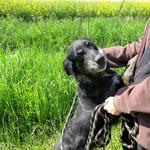 Lali , adoptée le 03/06/2016