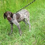 Lilou adoptée en Juin 2016