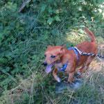 Iago ratier  adopté en Juillet 2017