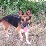 Jania berger allemand   adoptée en Aout 2019